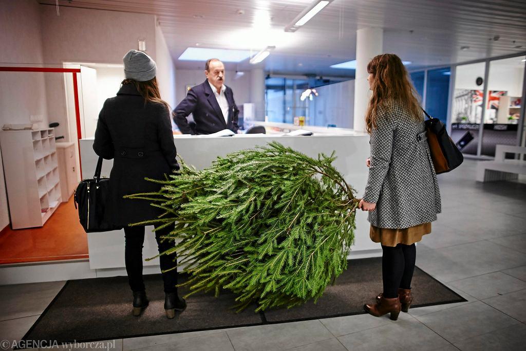 Boże Narodzenie. Jak dbać o żywą choinkę, aby była zielona przez długi czas?