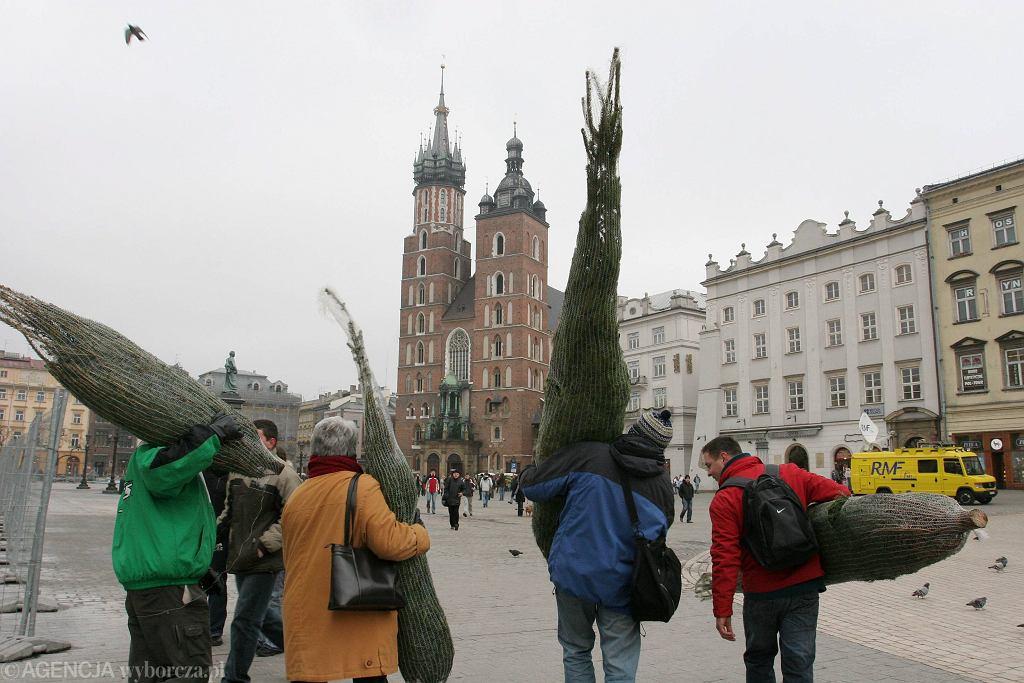 Darmowe choinki. Gdzie można odebrać świąteczne drzewko za darmo?