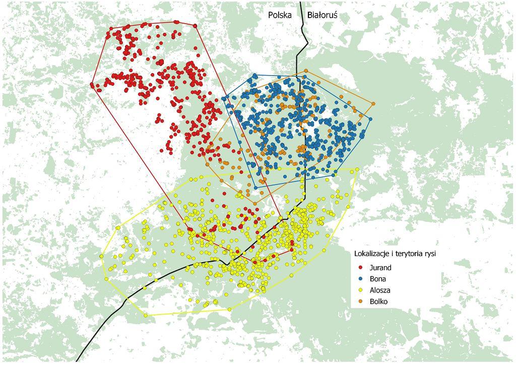 Terytoria rysi z lat 2008-12 na podstawie badań IBS PAN w Białowieży.