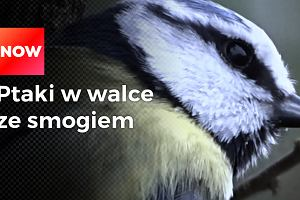 Ptaki pomagają w walce ze smogiem. Czesi pokazują, jak zanieczyszczenie powietrza wpływa na zdrowie