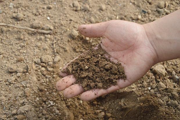 Żyzna gleba to podstawa