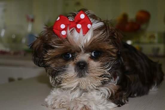 Zdjęcie numer 1 w galerii - Z psem do pracy. Dobry pomysł czy przesada?