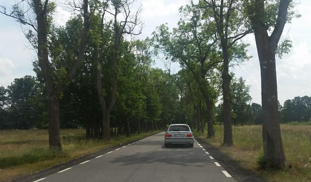Droga z Kiełpina do Jarogniewic. Jest nowy asfalt i nie wycięto drzew