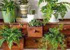 Rośliny doniczkowe w domu - ciekawe pomysły na aranżacje