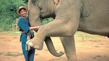 Tajlandia - wakacje ze słoniem