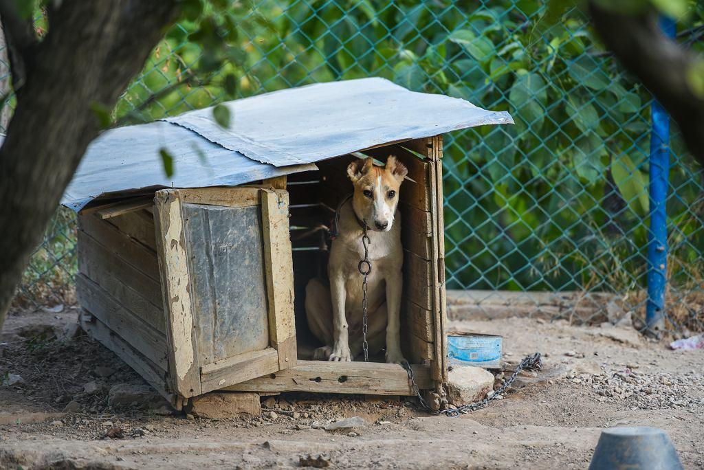 Pies na łańcuchu - zdjęcie ilustracyjne