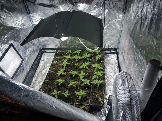 Ярослав К. имел шесть палаток с марихуаной в квартире в Мокотуве.