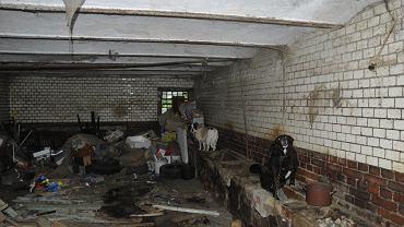 Zwierzęta odebrane w miejscowości Kromnów (gmina Stara Kamienica) brodziły w swoich odchodach