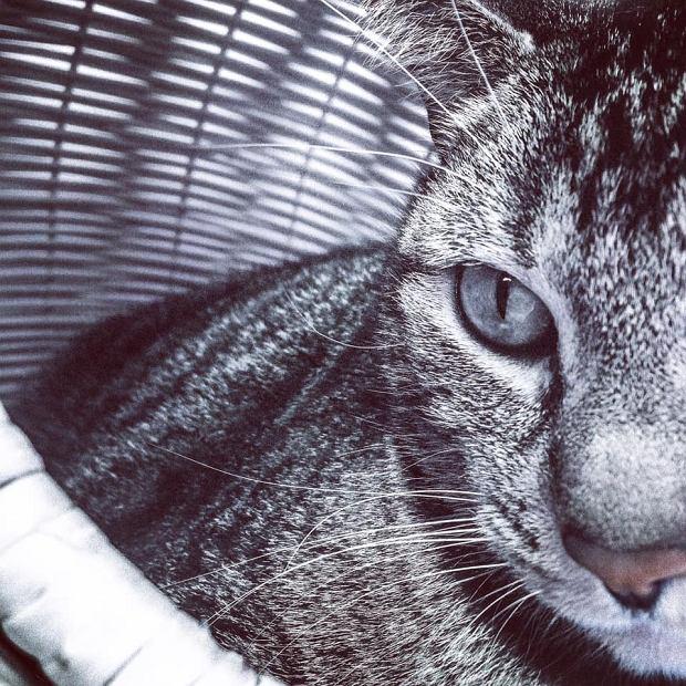 Zdjęcie numer 76 w galerii - Karmel, Daktyl, Kapitan Benny, Ptyś, Wiesław... Kochane i piękne - oto Wasze koty [GALERIA NA DZIEŃ KOTA]