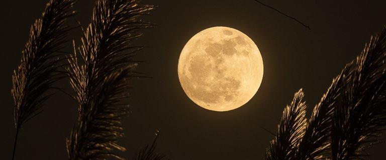"""""""Różowy Księżyc"""". Sprawdź, kiedy oglądać najjaśniejszą pełnię 2020 roku"""
