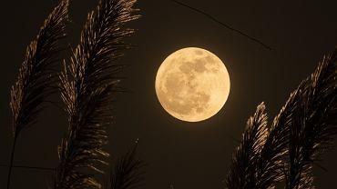 Kiedy zobaczymy 'różowy Księżyc'? (zdjęcie ilustracyjne)