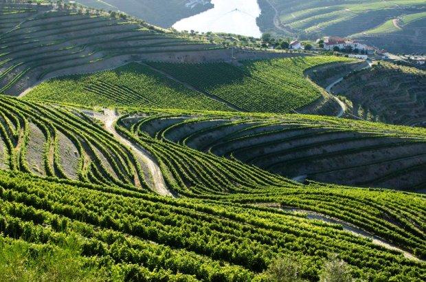 Dolina Douro/ fot. Shutterstock