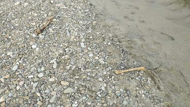 Kości znalezione w korycie rzeki Sole, Oświęcim. Źródło: Małopolska Policja/ Facebook