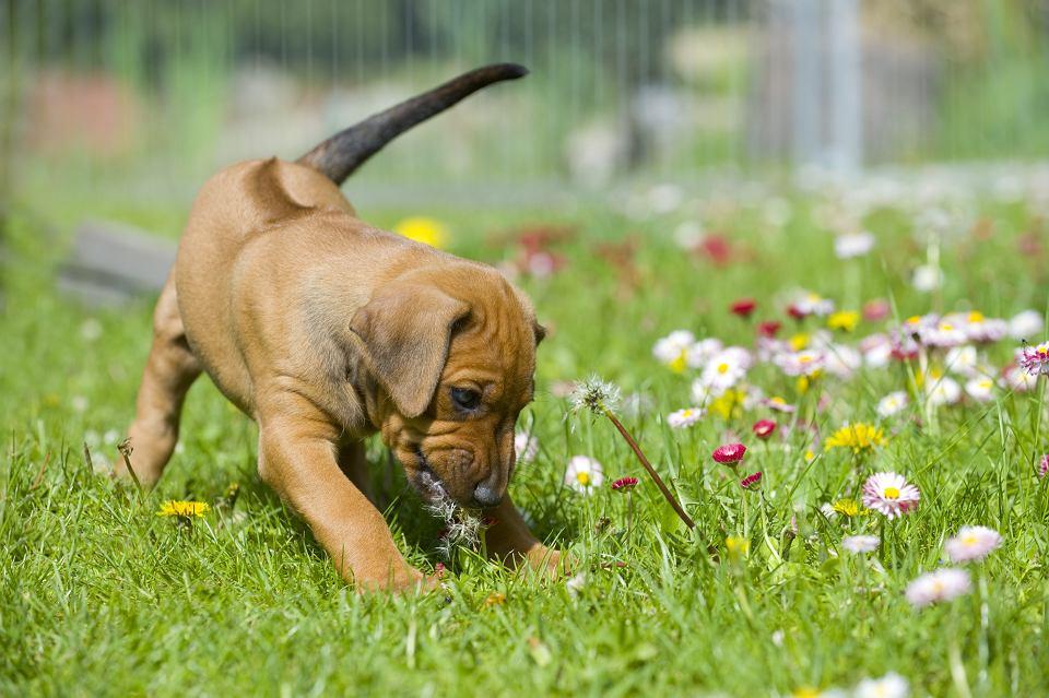 Rośliny szkodliwe dla zwierząt
