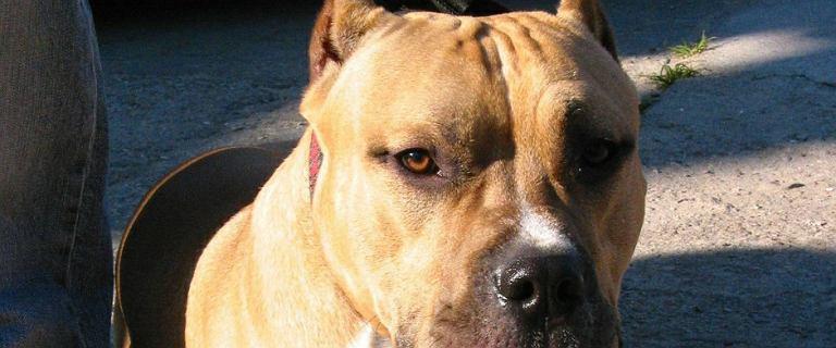 Nawet 5 tys. zł kary za spacer z psem bez smyczy i kagańca. Nowe prawo