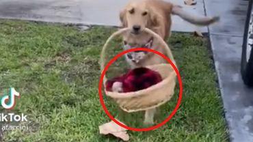 Pies przyniósł sąsiadom koszyk. Zawartość ich zaskoczyła