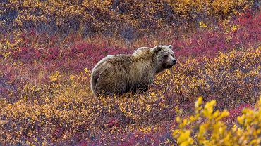 Park Narodowy Denali. Zdjęcie ilustracyjne
