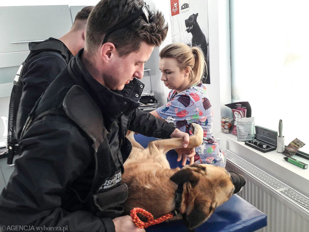 Dolnośląski Inspektorat Ochrony Zwierząt przez pandemię stracił sponsorów. Na zdjęciu interwencja z 2019 r.