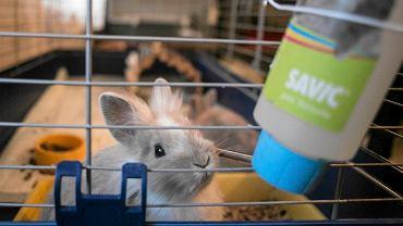 Ośrodki adopcyjne dla królików istnieją w innych miastach w Polsce, m.in. w Sopocie