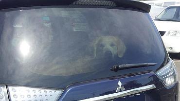 Warszawa. Pies zamknięty w rozgrzanym samochodzie na parkingu