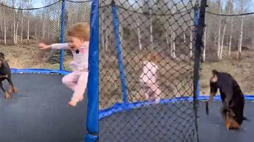 Dziecko z psem na trampolinie