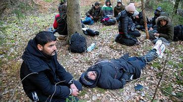 Migranci w pobliżu polsko-białoruskiej granicy
