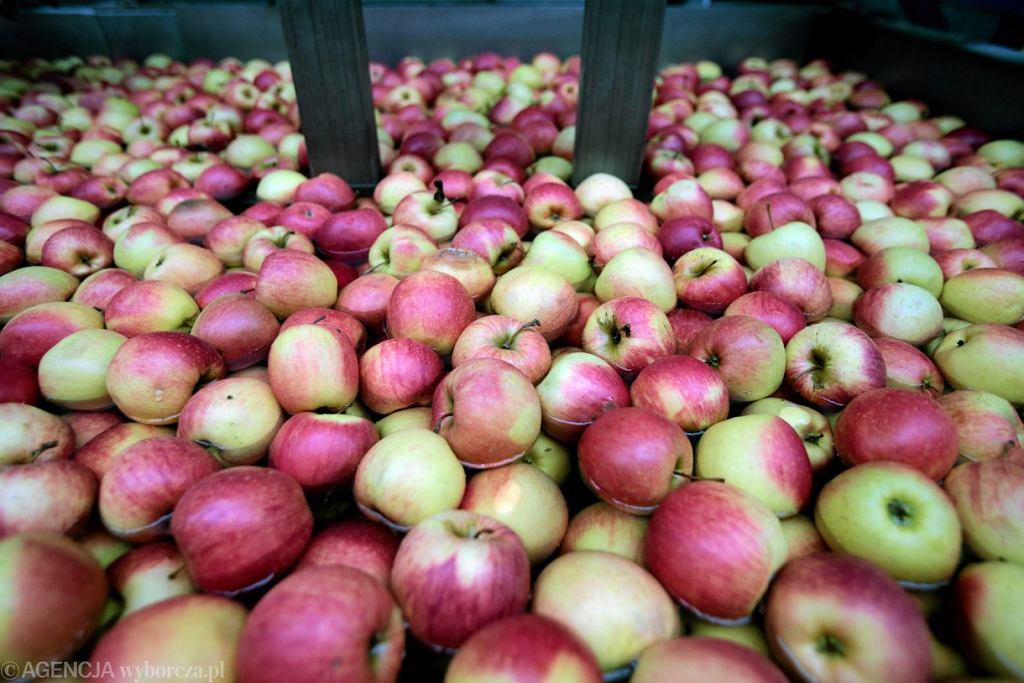 Jabłka są niezmiennie naszym hitem eksportowym