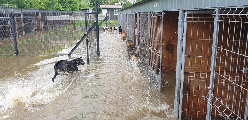 Schronisko dla zwierząt pod Mielcem tonie. 'Chcemy walczyć o życie naszych psów. Błagam pomóżcie'