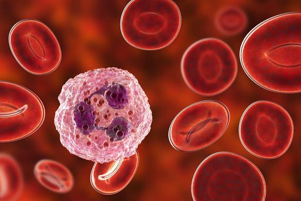 Neutrocyty - co oznaczają neutrocyty podwyższone i obniżone?