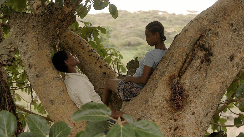 Drzewo figowe / MATERIAŁY PRASOWE