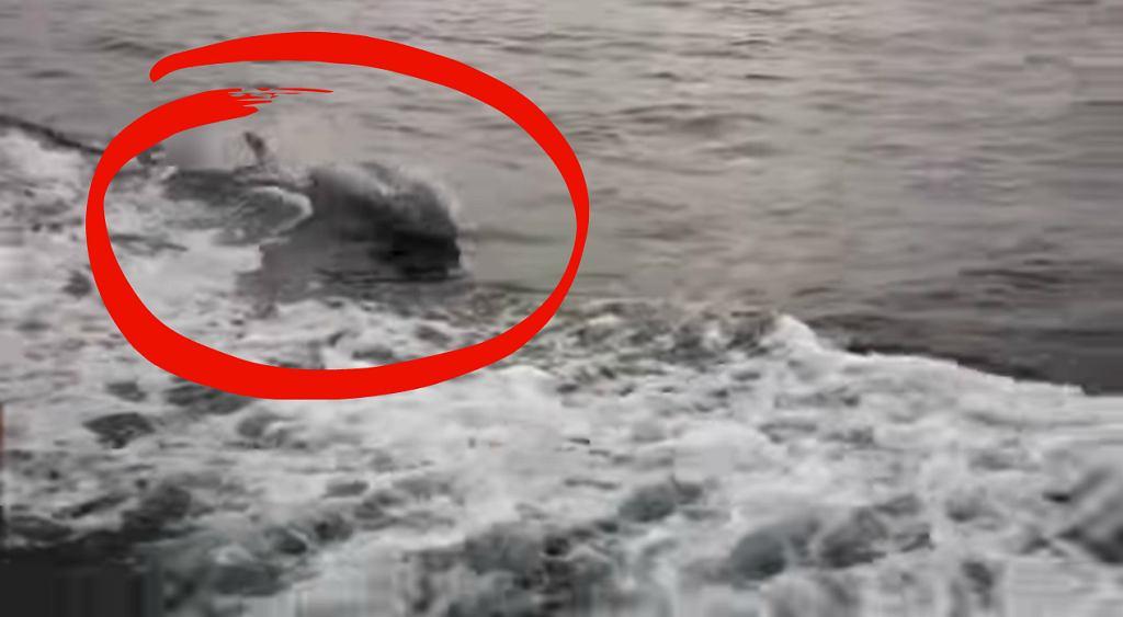 Spotkanie wędkarzy z delfinem