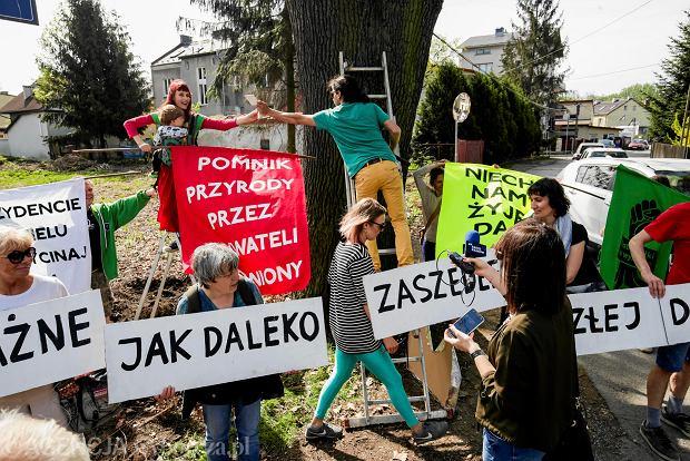 """Spór na budowie Trasy Łagiewnickiej o 200-letni dąb """"Jacek"""". """"To jedno z najstarszych drzew Krakowa"""""""