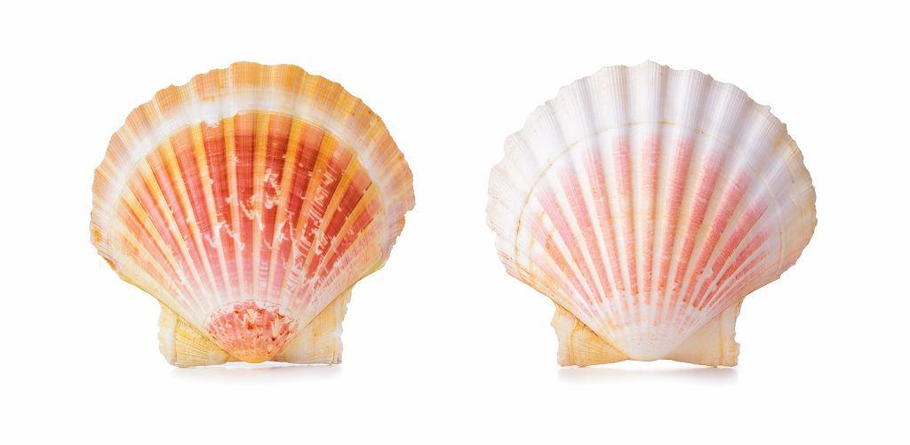 Dekoracyjne muszle przegrzebków można wykorzystać, ito wielokrotnie, jako naczynia do zapiekania - są bardzo trwałe