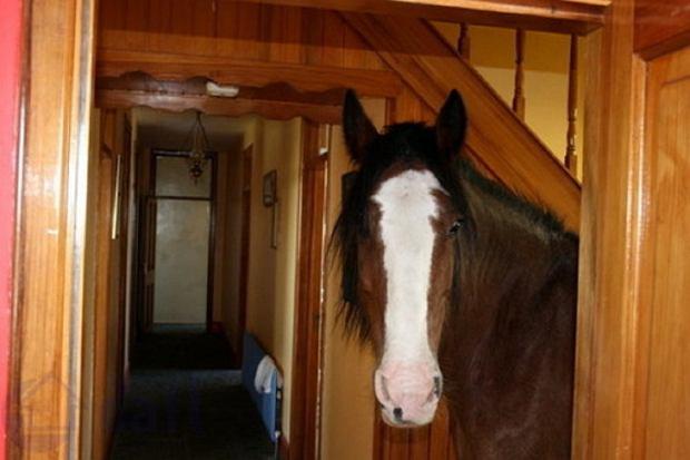 Koń w domu? Jedno ze zdjęć nieruchomości