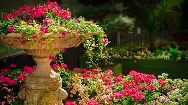 Kwiaty ogrodowe. Jakie kwiaty na rabaty ogrodowe dla początkujących? Zdjęcie ilustracyjne