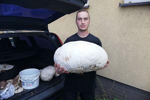 Pan Kamil znalazł czasznicę o wadze 7,5 kg. To naprawdę imponujący grzyb! Jak go jeść? Podpowiadamy