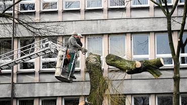 Wycinka drzew przed sądem przy ul. Dąbrowskiego w 2007 r. Teraz jest tam 'patelnia' z parkingiem
