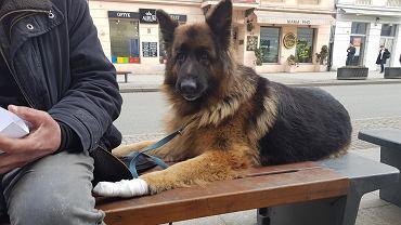 Skradziony pies (zdjęcie z 13 marca)
