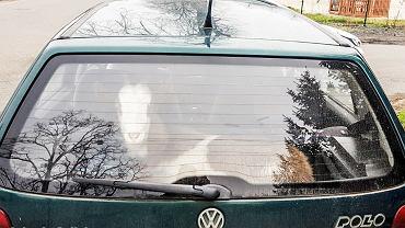 Policjanci zatrzymali nierzeźwego kierowcę, który w bagażniku przewoził kozę.