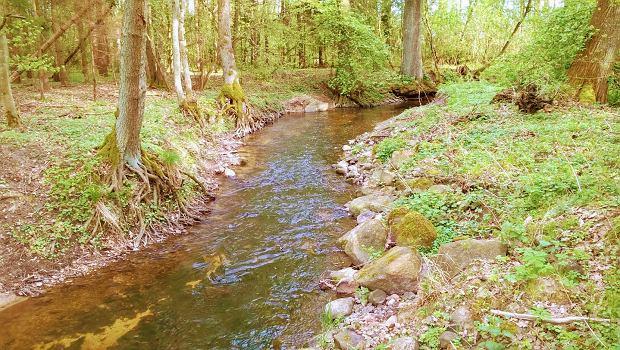 Zespół przyrodniczo-krajobrazowy wokół potoku Sucha utworzono w 2019 r. Szprotawa chce go rozwijać dla mieszkańców i turystów