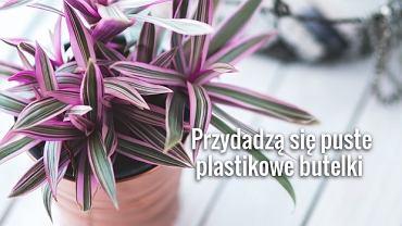Przed wyjazdem pozdejmuj rośliny z parapetów i odsuń od mocno nasłonecznionych okien.