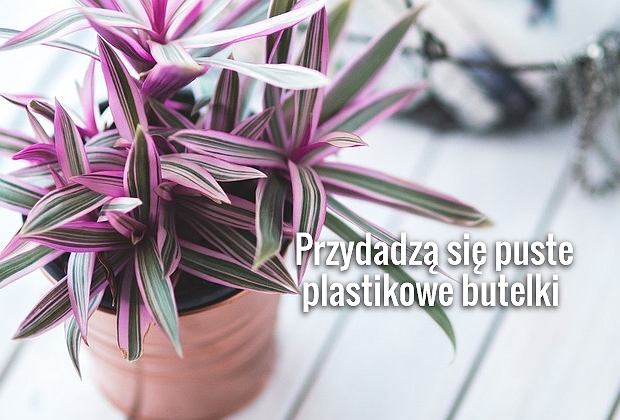 Urlopowe Podlewanie Czyli Jak Dbac O Kwiaty Gdy Nie Ma Nas W Domu