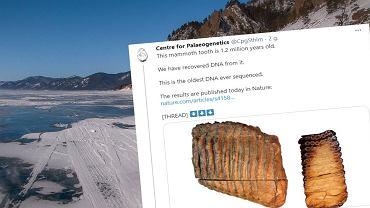 DNA mamuta odkryte na Syberii ma około 1,2 mln lat