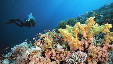 Tony medycznych śmieci na rafach koralowych. Jednorazowe maseczki dryfują po morzu