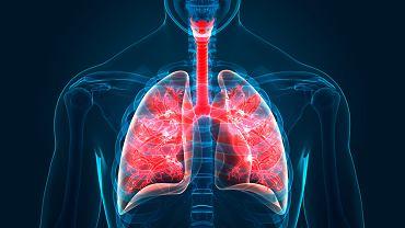 Krtań najczęściej jest dotykana przez choroby zapalne wywoływane bakteriami albo wirusami