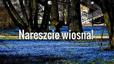 Wiosna w Parku Klepacza w Łodzi