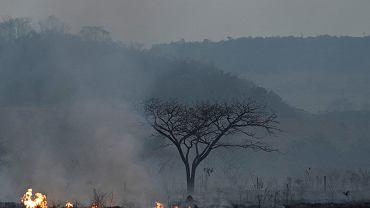Brazylia. Pożary lasów w Amazonii.
