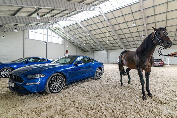 450 koni mechanicznych vs. 1 koń tradycyjny