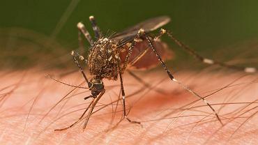 Rozpoczyna się sezon na komary, jak sobie z nimi radzić?