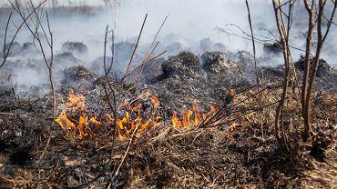 Biebrzański Park Narodowy. Pożar trwa już 5 dzień